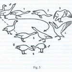 gansos